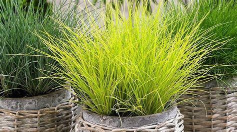 quelle plante pour une chambre quelles plantes d intérieur choisir pour une pièce peu