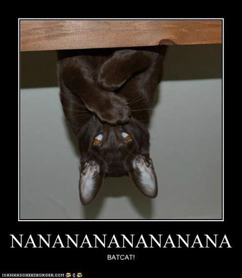 Bat Meme - meme lulz 2 funny cat pictures batman cat and pictures