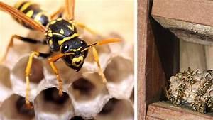 Comment Se Débarrasser Des Souris Dans Une Maison : nid de gu pes comment se d barraser d 39 un nid de gu pes c t maison ~ Nature-et-papiers.com Idées de Décoration
