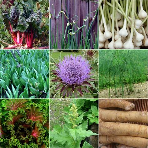 plants that grow back every year 7 perennial vegetables to plant in your garden