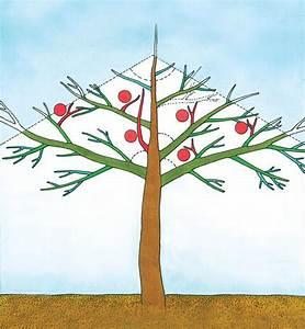 Wann Apfelbaum Pflanzen : apfelbaum schneiden apfelb ume richtig schneiden apfelb ~ Lizthompson.info Haus und Dekorationen