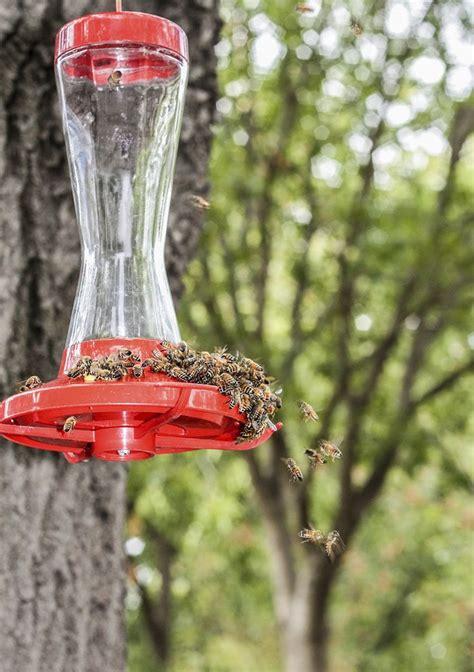 tips  keeping bees   hummingbird feeders