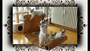 Sisalteppich Für Katzen : diy chaiselongue schaukel f r katzen swing for cats youtube ~ Orissabook.com Haus und Dekorationen