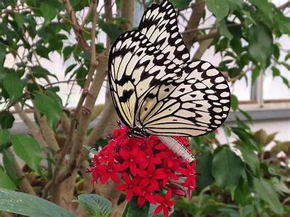 Butterfly Put Bay Cave Ohio Attractions Golf