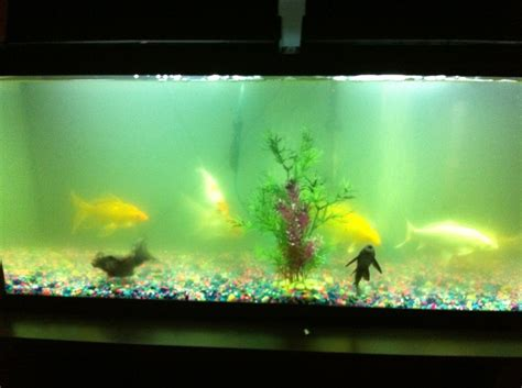 cloudy fish tank how to keep my fish tank water crystal clear i just changed my aquarium club