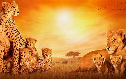 African Desktop American Wallpapers Cats History Month
