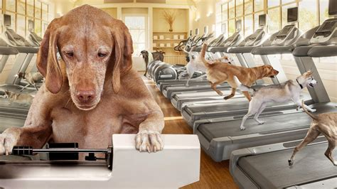 weight management dog food fromm family foods