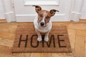 Vermieter Verbietet Hund : wann muss der vermieter den hund erlauben ~ Lizthompson.info Haus und Dekorationen