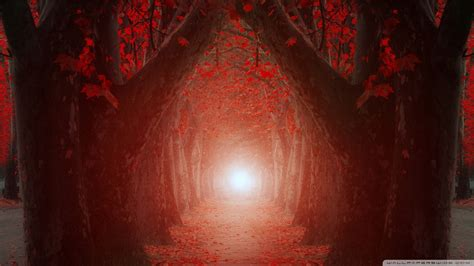 light      tree tunnel  hd desktop