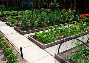 Raised Garden Beds Versus Row Gardening