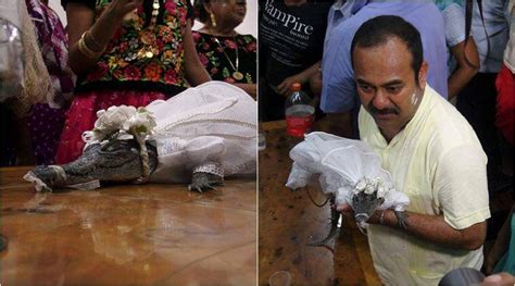 Mexican Mayor Marries A Crocodile And Even Seals The