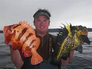 Tiger Rockfish and China Rockfish | Hunting
