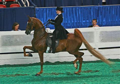 saddlebred barns saddle seat georgia horseback riding