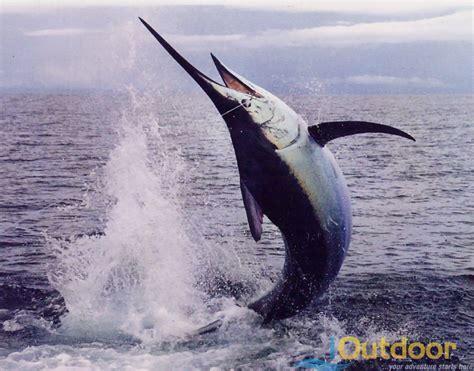 marlin fishing florida ioutdoor