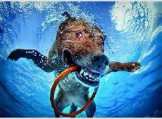 Hunde unter Wasser Bildband BuchTipp