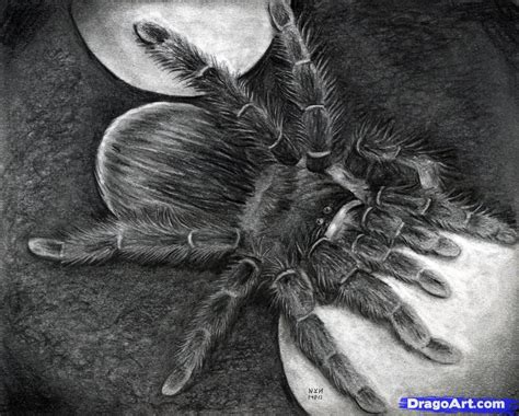draw  spider real spider step  step realistic