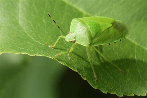 common garden pests images