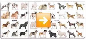 Razze cani: classificazione cinofila e razze canine