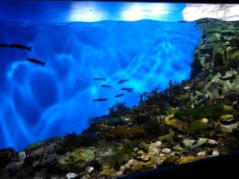 aquarium la rochelle foto di aquarium de la rochelle la rochelle tripadvisor