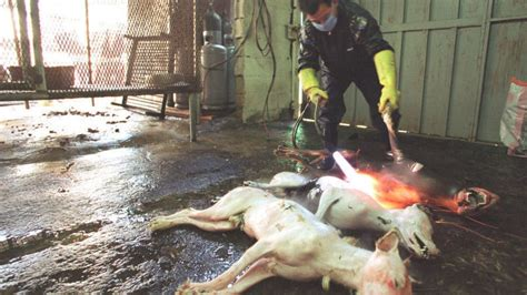 petition stop  yulin festival changeorg