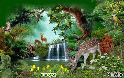 Nature Animaux Picmix Bois Sous