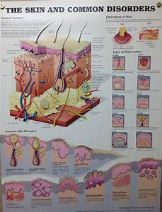 Pin By Amanda Stratton On Medical Skin Anatomy Skin