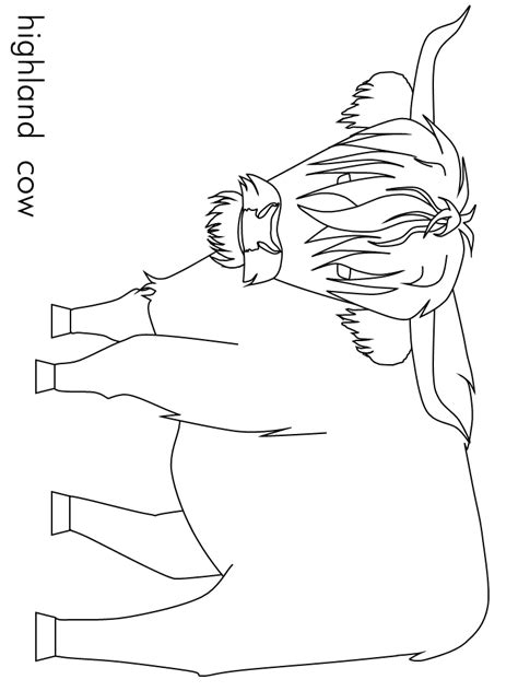 Highland Cow Coloring Pages