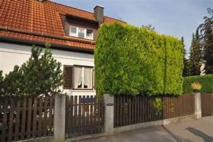 Langsam Wachsende Hecke : schnellwachsende hecken ~ Orissabook.com Haus und Dekorationen