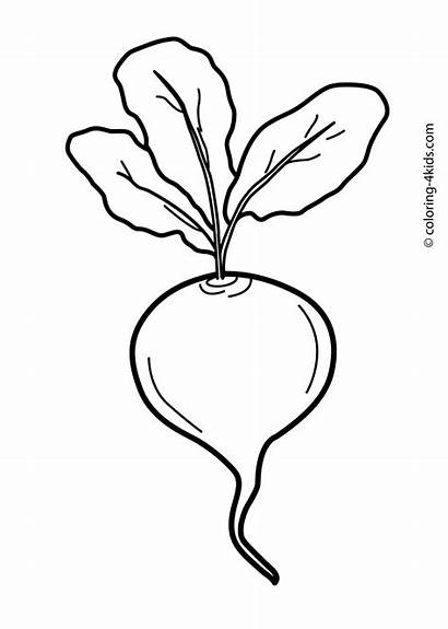 Coloring Vegetable Pages Printable Beet Clipartmag