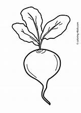 Vegetable Beet Coloring Vegetables Pages Radish Drawing Beetroot Printable Clipart Line Cart Beets Clip Drawings Colouring Sheets Fruit Printables Preschool sketch template