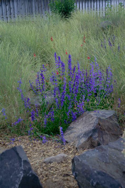 native plant garden benton franklin counties
