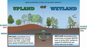 Conceptual Diagram Wetland Vs Upland Kg