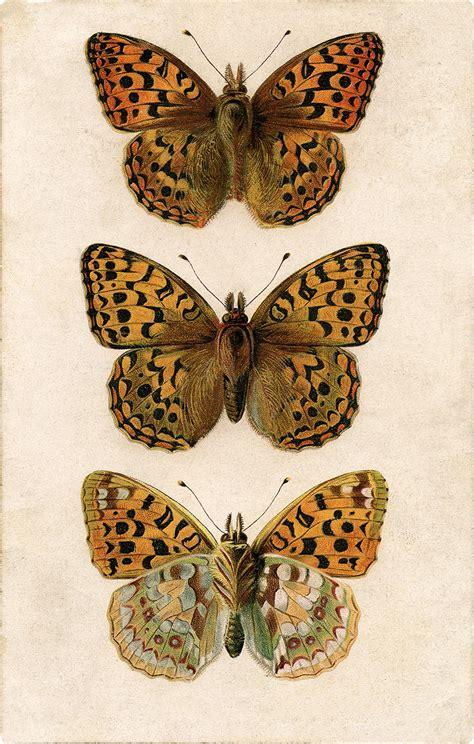 exquisite  illustration   butterflies image