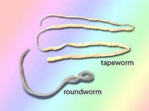 Keeping Your Cat worm Free ~ My Lovely Cats