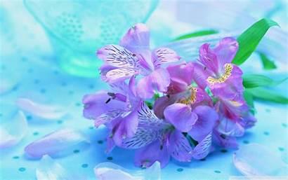Teal Purple Wide
