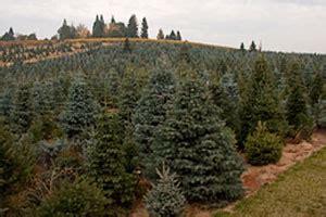 tree farms near sacramento best tree cutting experiences near sacramento 171 cbs sacramento