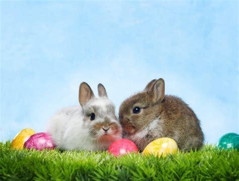 easter bunny twiniversity