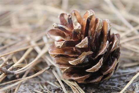 gratis billeder trae natur skov afdeling blad blomst