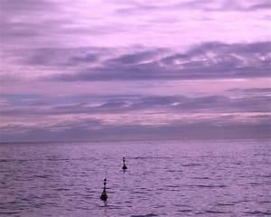 Fond Ecran Mer : fond ecran paysage violet the darkness purple ~ Farleysfitness.com Idées de Décoration