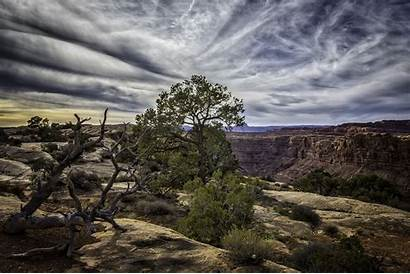 Colorado River Overlook Forest