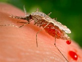 Target Malaria wants to end mosquito-borne disease using ...