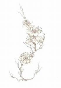 Fleur De Cerisier Tatouage : r sultat de recherche d images pour cerisier en fleurs ~ Dode.kayakingforconservation.com Idées de Décoration