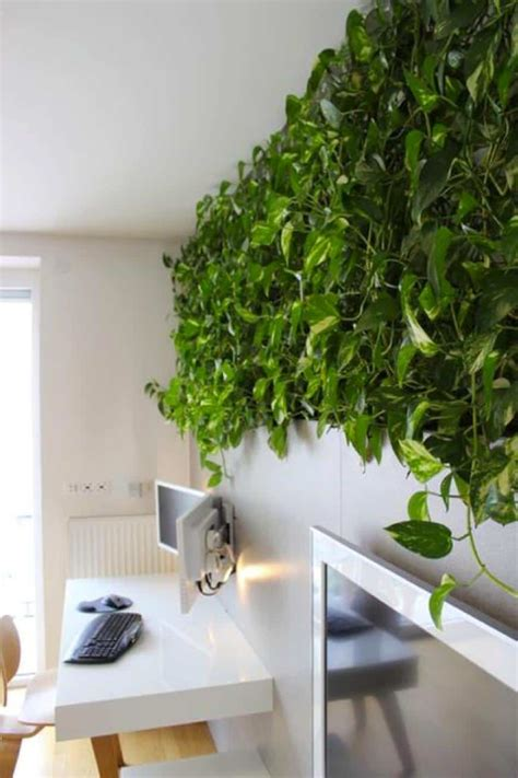 Home Office With Pothos Climbing Plants  Eye Catching