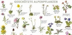 Pflanzen Bestimmen Nach Bildern : news bei ~ Eleganceandgraceweddings.com Haus und Dekorationen