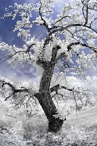 Deborah Sandidge Photography Infrared