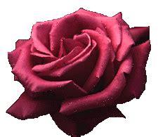 wunderschoene rosen als animierte gifs