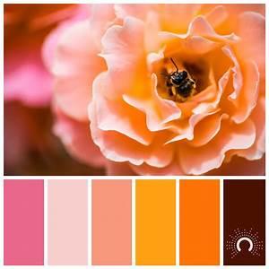 orange - astelle's colors