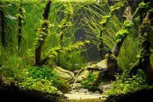 Co2 Bläschen Berechnen : co2 im aquarium berechnen ~ Themetempest.com Abrechnung