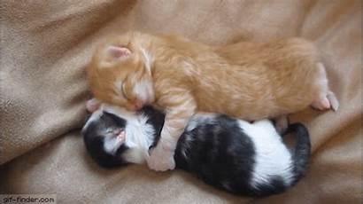 Hug Kitten Gifs Hugging Kittens Bring Thread