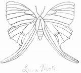 Moth Luna Coloring 22kb 639px sketch template